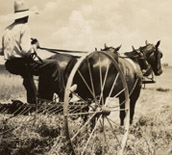 Preacher Garner with hay June 1939